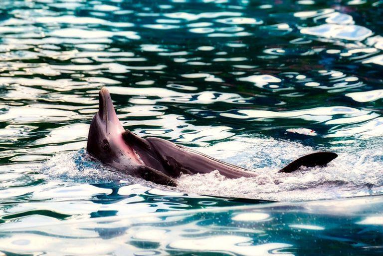 Kabinett beschließt weitere Förderung für den Schutz von Schweinswalen und Meeresenten